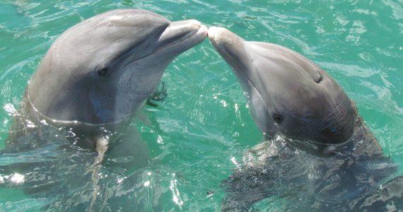 delfini-oman