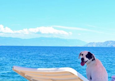 Crikvenica Monty's dog beach and bar