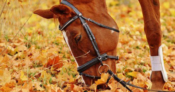 cavalli-liguria