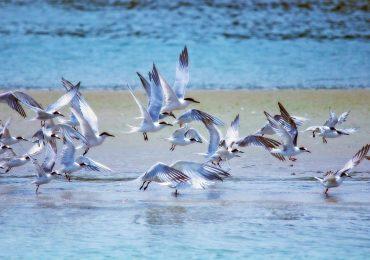 UNESCO riserve migratori